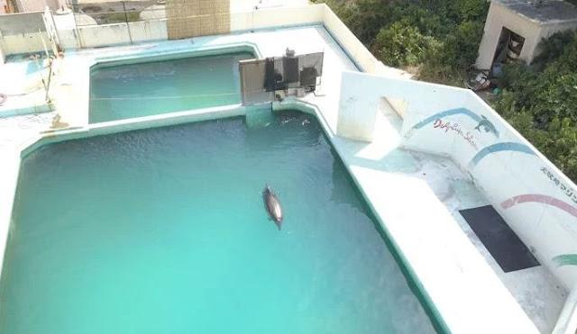 Inilah Honey: Lumba-lumba Jepang yang Paling Kesepian di Dunia, Kabar Terbarunya Bikin Menangis