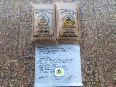 Benih padi yang dibeli   AGUS PRIYANTO Kebumen, Jateng..  (Sebelum packing karung).