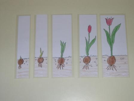 mamamisas welt die tulpe. Black Bedroom Furniture Sets. Home Design Ideas