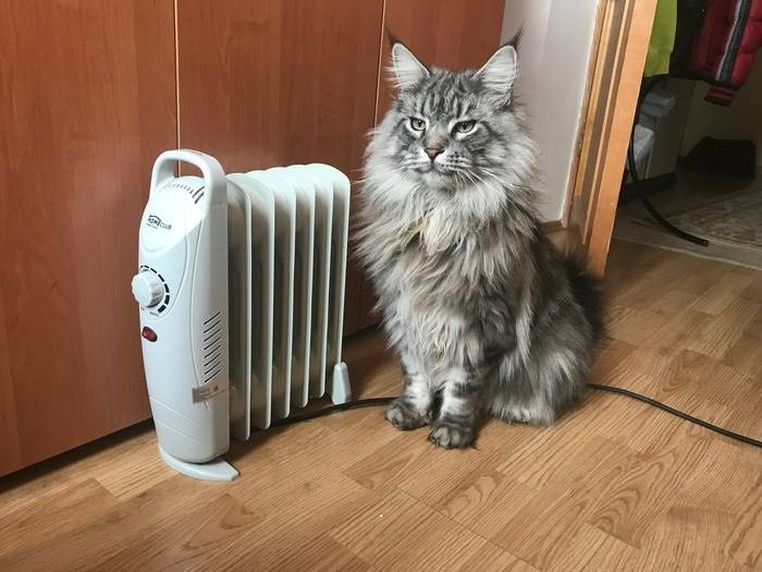 Is it your cat so big or the heater is small?