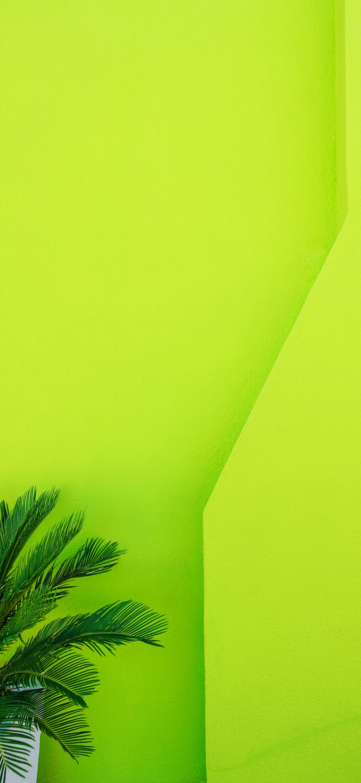 green-palm-tree-wallpaper