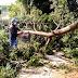 Prefeitura intensifica trabalho e retira árvores que caíram durante a chuva de domingo