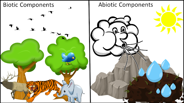 Biotic and Abiotic Factors, abiotic factors, biotic factors, climatic factors, edaphic factors, ecosystem, The living organisms and their surroundings, NCERT class 6, chapter 9, NCERT class 6th Science Solutions