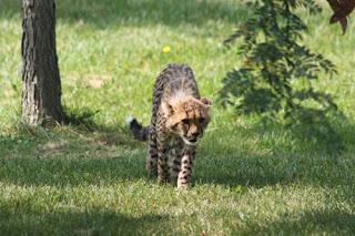 A Cautious Cub Approaches.