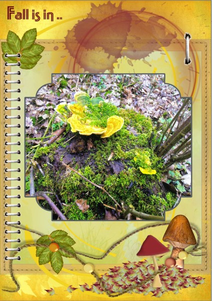 Oct.2016 Greetingscard - Fall is in ... small page