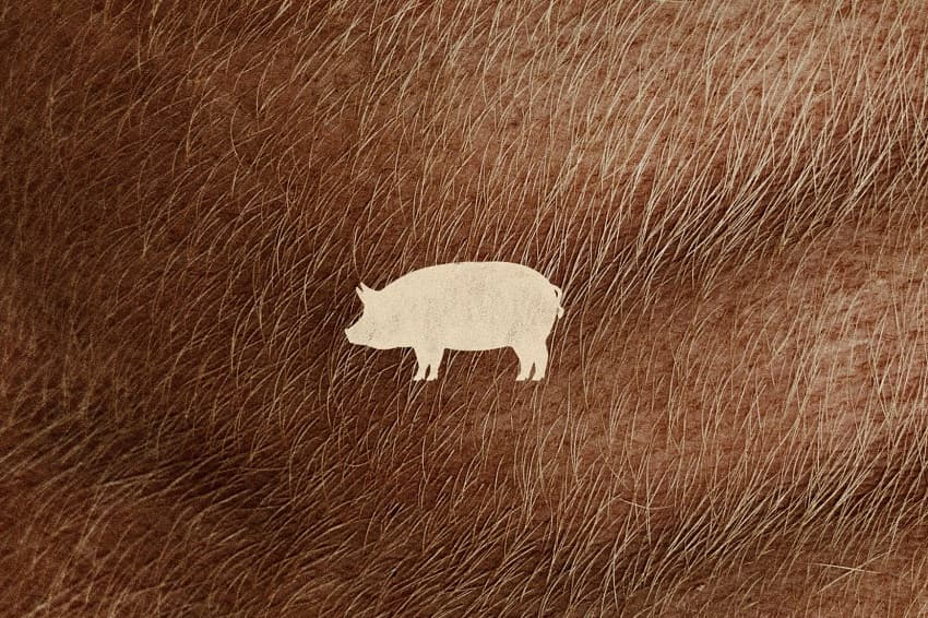 NEON показала трейлер ревендж-триллера «Свинья» с Николасом Кейджем