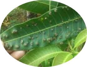https://caramencegahataumengurangigugurbunga.blogspot.com/2018/11/cara-mengatasi-hama-dan-penyakit-tanaman.html