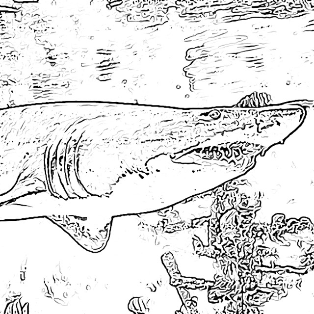 Shark coloring pages holiday.filminspector.com