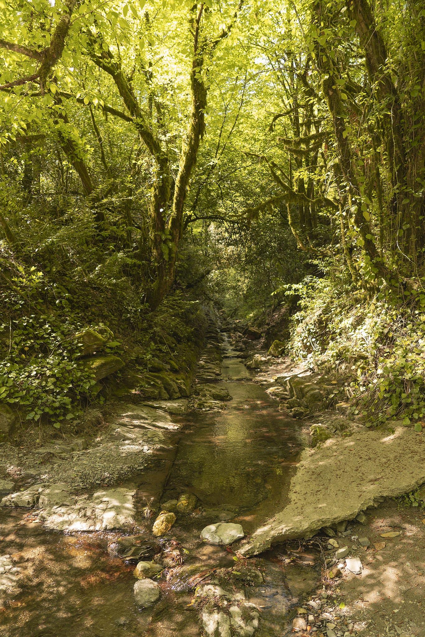 photo Igor Novik Dagomys brook Sochi summer pebbles forest mountain stream atmosphere