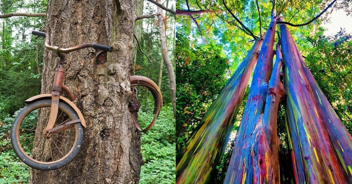 7 Strange Patterns Emerge When You Physically Inhibit A Tree Or Plant Growth