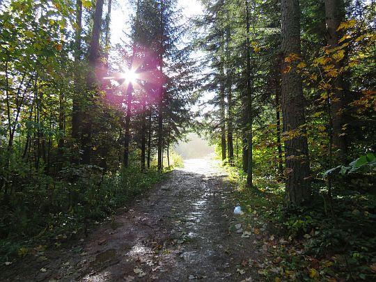 Las za Przełęczą Osice.