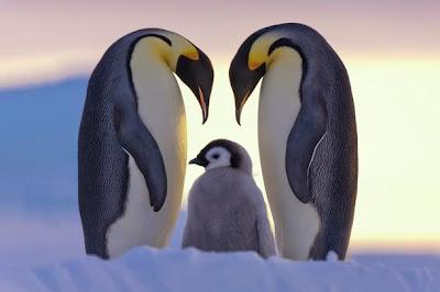 cinta ibu bapa - mengenali dan memahami akan cinta, kasih dan sayang yang sebenar