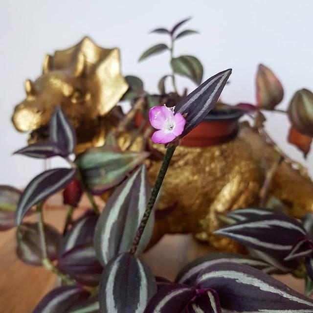 gold dinosaur plant