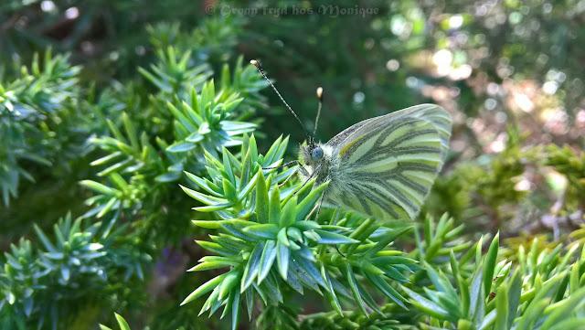 http://gronnfrydhosmoni.blogspot.com/2020/05/blog-post.html