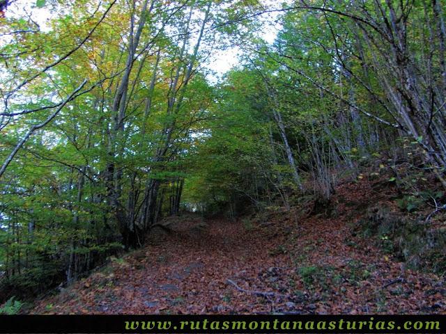 Ruta Víboli Peña Subes y Sen Mulos: Bosque Otoñal