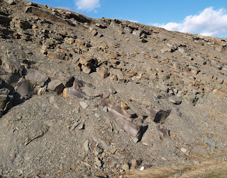 Layers of rock where trackways were found along the Sussex road cut
