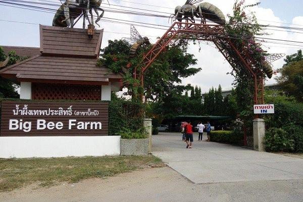Big Bee Farm Thái Lan