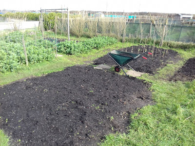 St Ives Cornwall Allotment - Late Winter