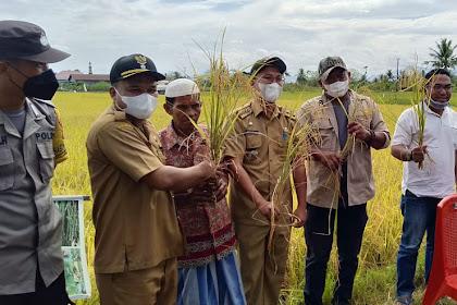 Petani Desa Borikamase dan Borimasunggu Panen Raya Padi Perdana