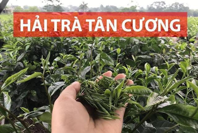 Dịch vụ phân phối trà Thái Nguyên giá xưởng uy tín, chất lượng tốt