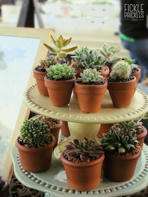 Succulent wedding favours displayed on a tiered cake stand.