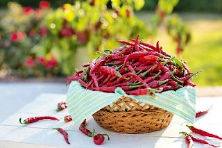 Bisnis Jual Beli Lombok Cabe Rawit dan Cara Pemasarannya