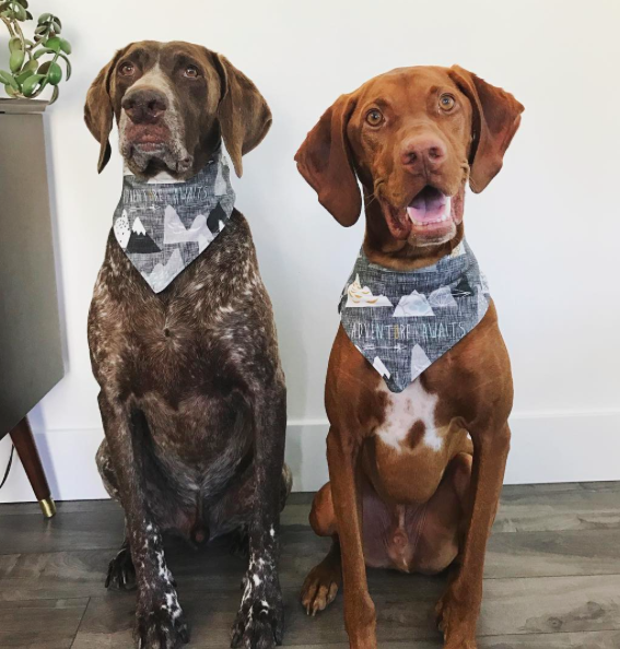 YA Yeah Yeah: Guest Post: Katy Birchall on Dogs of Instagram