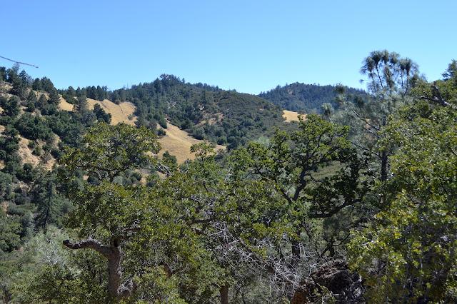 oak covered hills through the oak tops