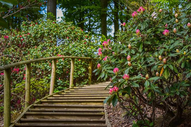 Himalayan Garden and Sculpture Park wooden bridge between flowers