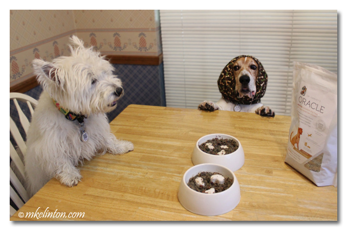Pierre Westie and Bentley Basset are waiting to eat their Dr. Harvey's Oracle