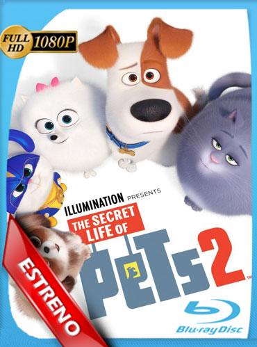 La Vida Secreta de Tus Mascotas 2 (2019) HD 1080p Latino Dual [GoogleDrive] TeslavoHD