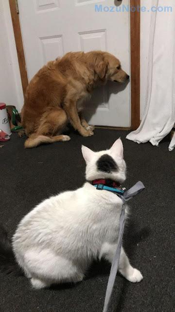 Ini Akibatnya Jika Kucing Sudah Menguasai Anjing
