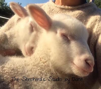 The Shepherd's Studio by Diane Coe