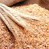 هل يلقى القمح مصير القطن ؟