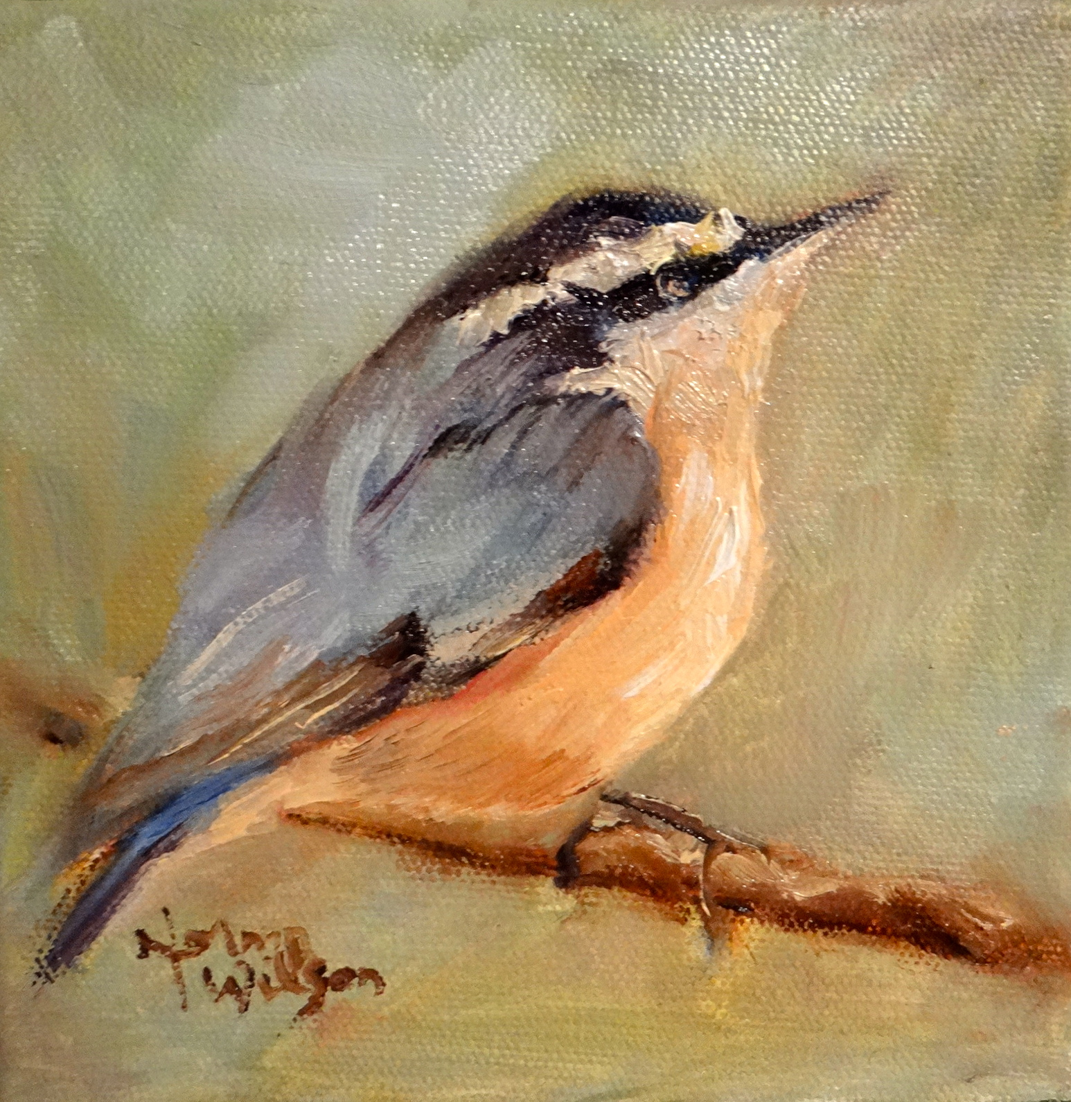 Norma Wilson Art: Wildlife Nuthatch Bird Oil Painting Art