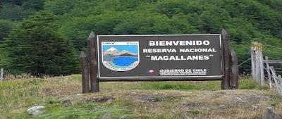 Magallanes National Reserve near Punta Arenas.