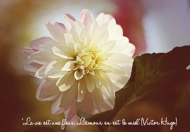 Illustration de la citation : 'La vie est une fleur. L'amour en est le miel'