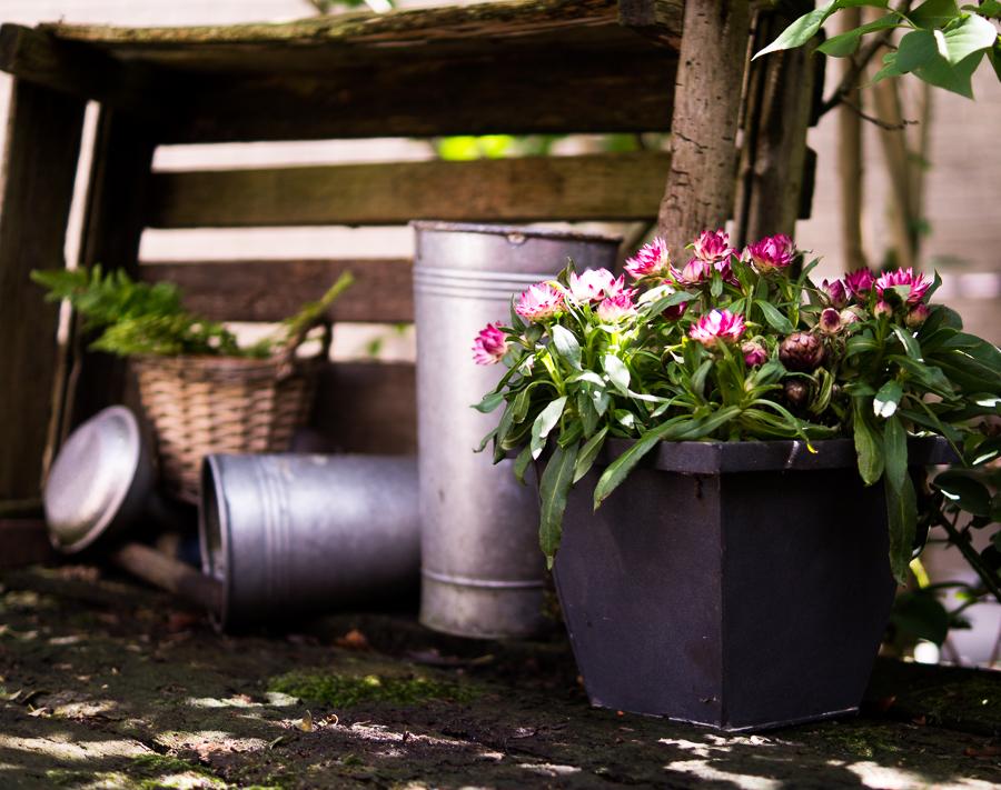 Blog + Fotografie by it's me! | fim.works  Bunt ist die Welt | Garten im Juni 2016 | Strohblume im Topf und Deko