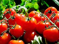 Cara Praktis Budidaya Tomat Dalam Polybag, Hasil Panen Melimpah Dan Kualitasnya Baik
