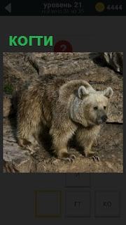 На камнях стоит медведь и показывает свои острые когти, которыми ловит свою добычу