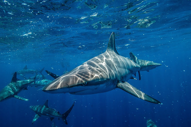 Shark Fishing in Maine – What to Expect