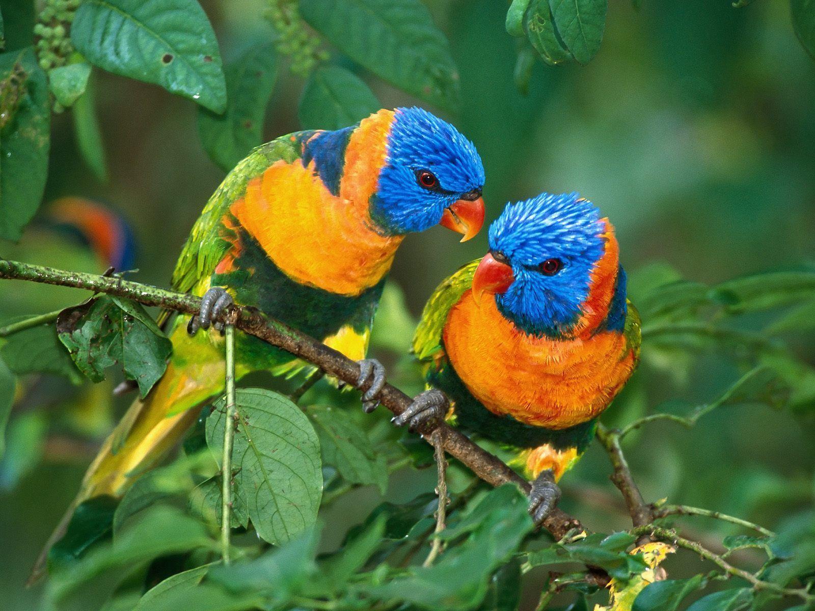 Birds hd wallpapers, bird wallpapers