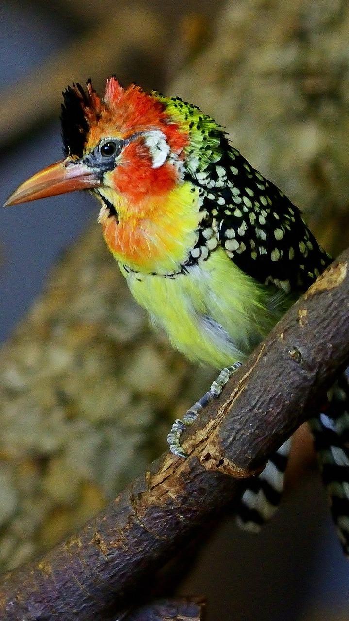 Beautiful exotic bird.