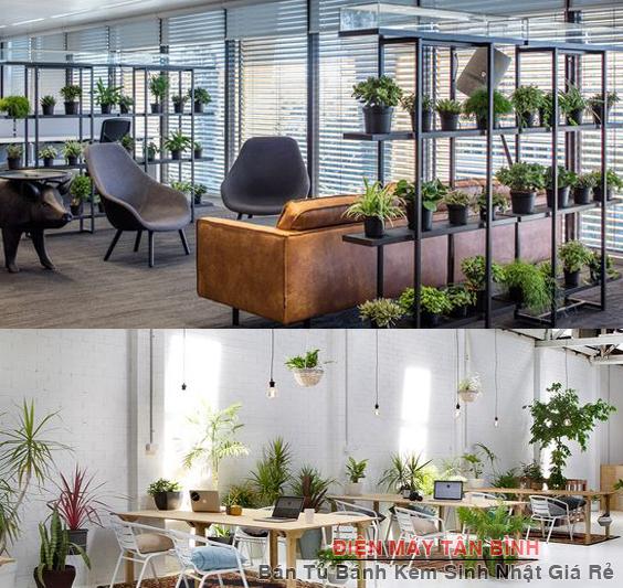 trang trí cây xanh văn phòng