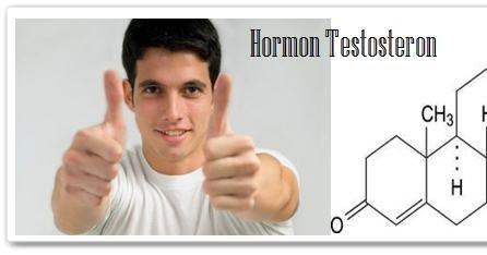 cara alami meningkatkan hormon testosteron pria vig