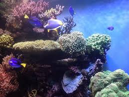 Pengertian Ekosistem Terumbu Karang Menurut Para Ahli [Materi Lengkap]