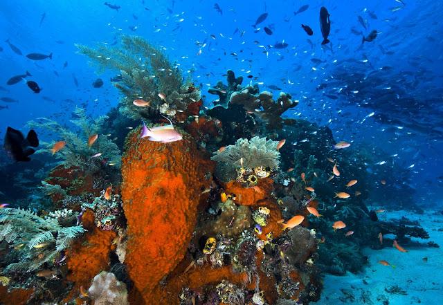 Wisata Teluk Cendrawasih