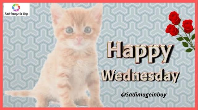 Happy Wednesday images | funny wednesday memes, wacky wednesday quotes, funny happy meme, funny wednesday meme