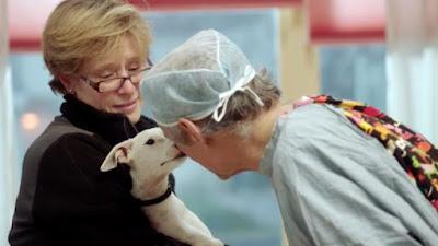 The Dog Doc Documentary Image