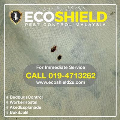 Eco Shield Pest Control Selangor Malaysia